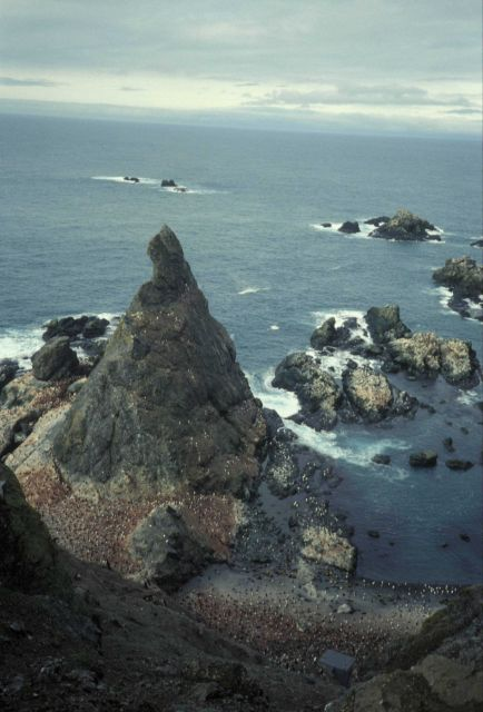 A penguin colony on the rocky coast of Seal Island. Picture