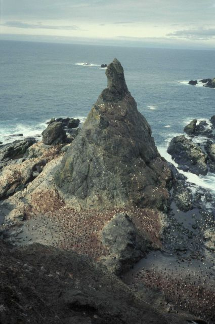 A penguin colony surrounds the foot of a rocky pinnacle at Seal Island. Picture