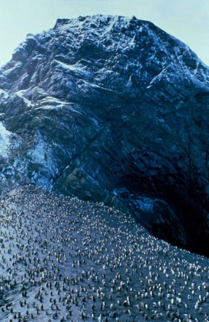 A penguin colony at Seal Island, South Shetland Islands, Antarctica. Picture