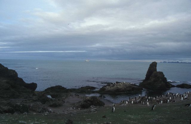 Chinstrap penguins at Cape Shireff, Livingston Island. Picture