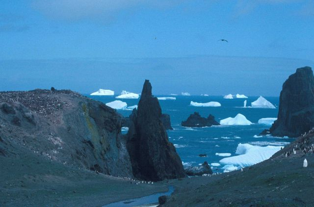 Chinstrap penguin colony, Seal Island, Antarctica. Picture