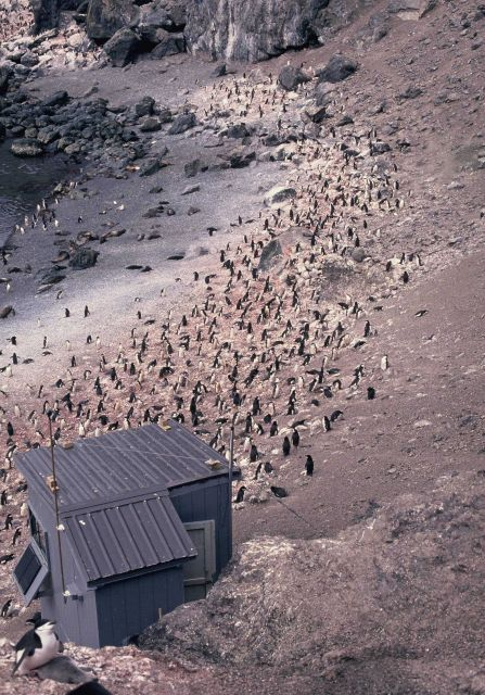 An observation shack at a chinstrap penguin colony on Seal Island. Picture