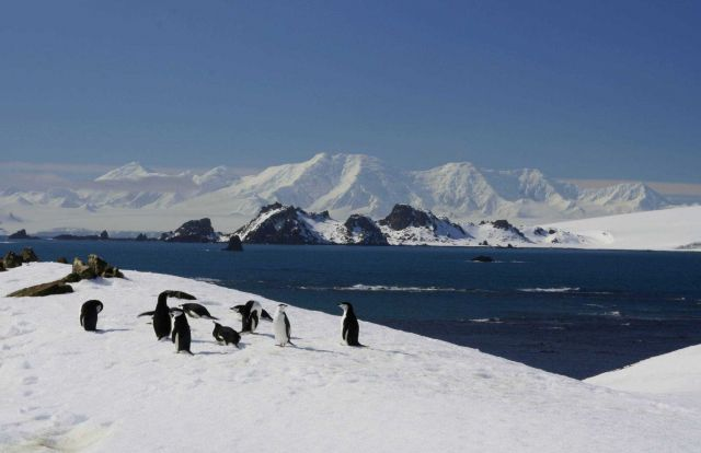 A group of chinstrap penguins near an icy bay, South Shetland Islands. Picture