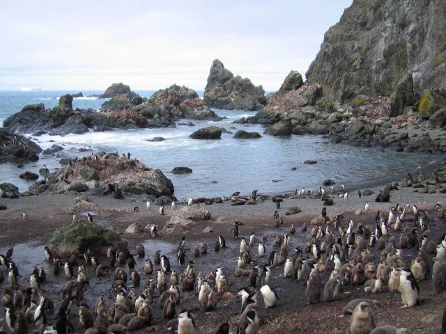 A chinstrap penguin colony at North Cove, Seal Island, with Antarctic fur seals nearby. Picture