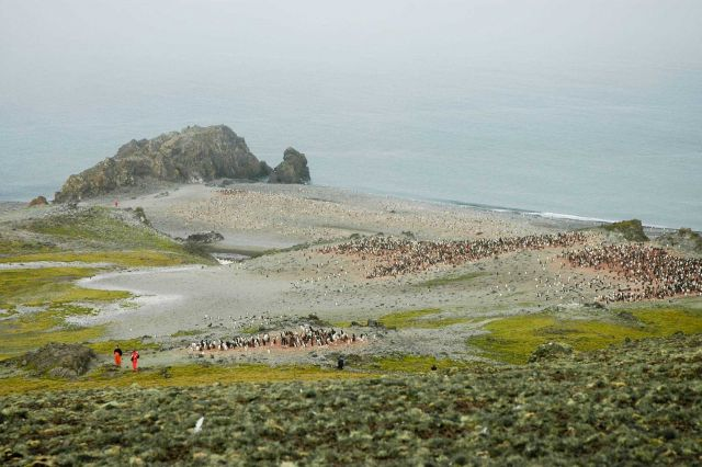 Scientists observing colonies of Adelie penguins on King George Island. Picture