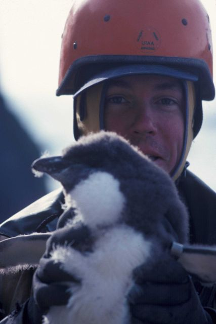 An AMLR penguin researcher with a penguin chick, Seal Island, South Shetland Islands. Picture