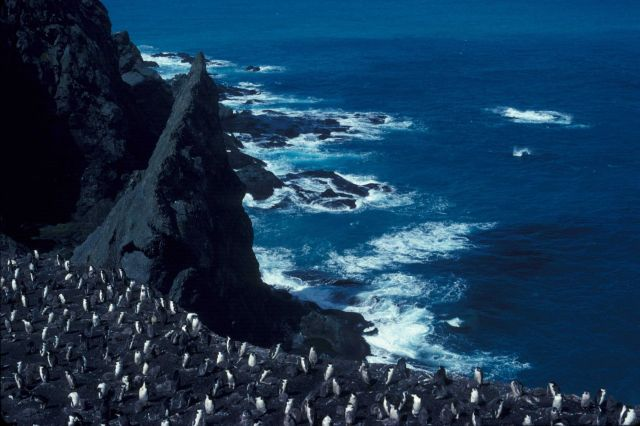 Penguin colony on Seal Island, Antarctica. Picture