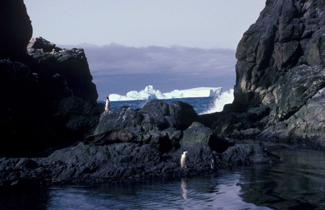 Chinstrap penguins and an Antarctic fur seal at Seal Island, Antarctica. Picture