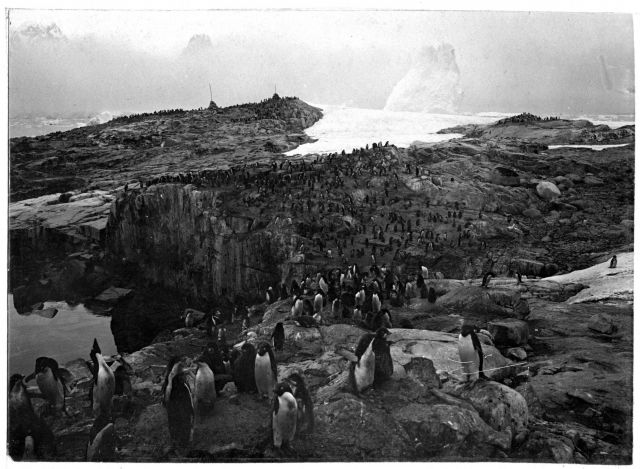 An Adelie penguin colony at Petermann Island during the Charcot Expedition taken from the same point as image fish9029. Picture