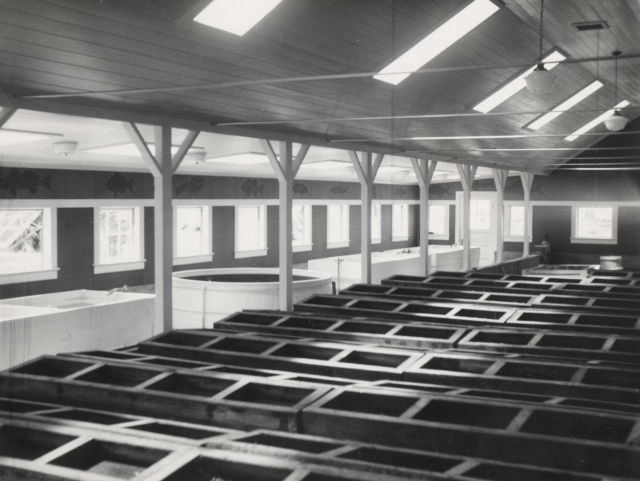 Interior view of aquarium and terrapin rearing house. Picture