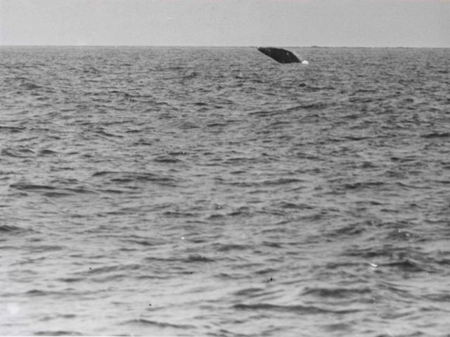 Gray whale falling back after a high breach Picture
