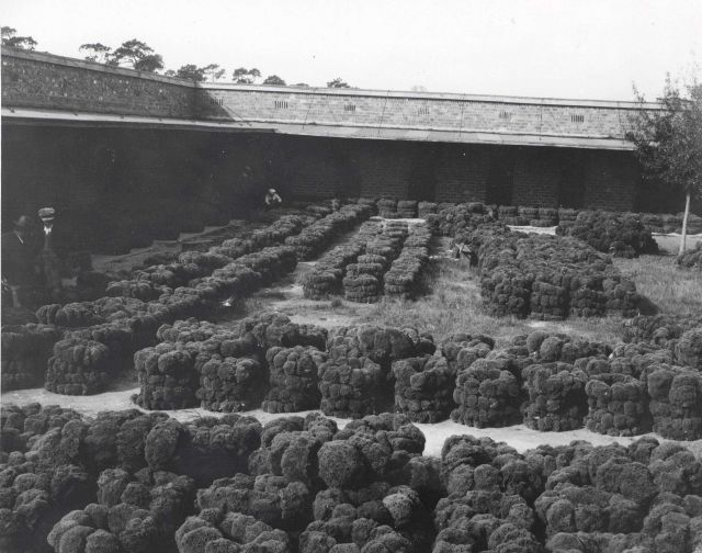 Sponges drying at warehouse yard. Picture