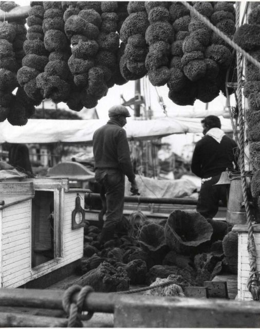 Sponges drying on fishing boat Picture