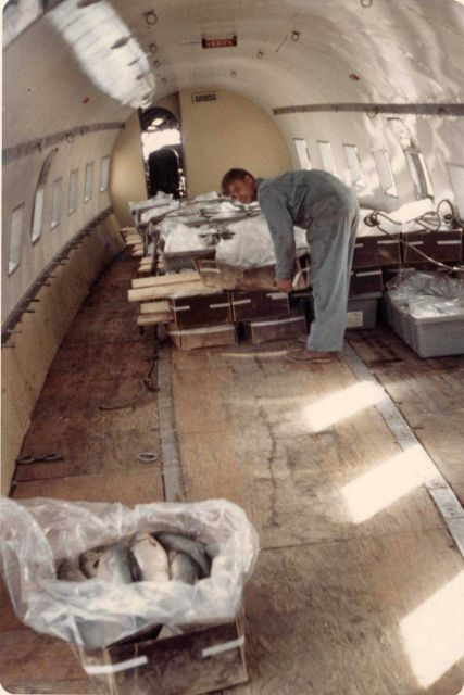 Silver salmon in-the-round are air shipped from Bethel to Anchorage for processing at the Alaskan Frozen Products plant. Picture