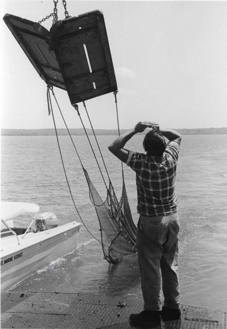Alewife research - Setting otter trawl net from VIMS ferry boat LANGLEY Picture