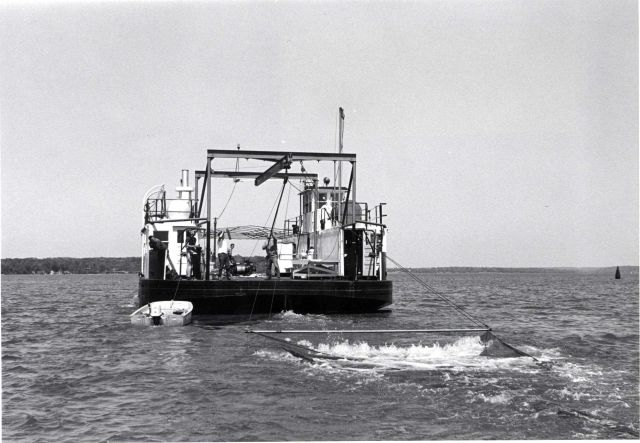 Alewife research - Hauling experimental mid-water trawl aboard VIMS ferryboat LANGLEY. Picture