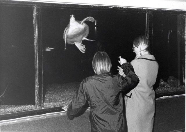 Visitors enjoying the BCF aquarium Picture