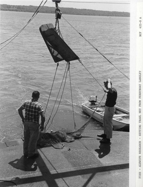 Alewife research - Setting trawl net from Virginia Institute of Marine Science ferry boat LANGLEY. Picture
