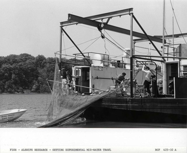 Alewife research - Setting experimental mid-water trawl net from Virginia Institute of Marine Science ferry boat LANGLEY. Picture