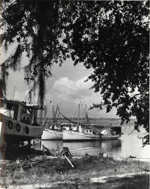 Shrimp boats at Back Bay Harbor, Biloxi. Picture