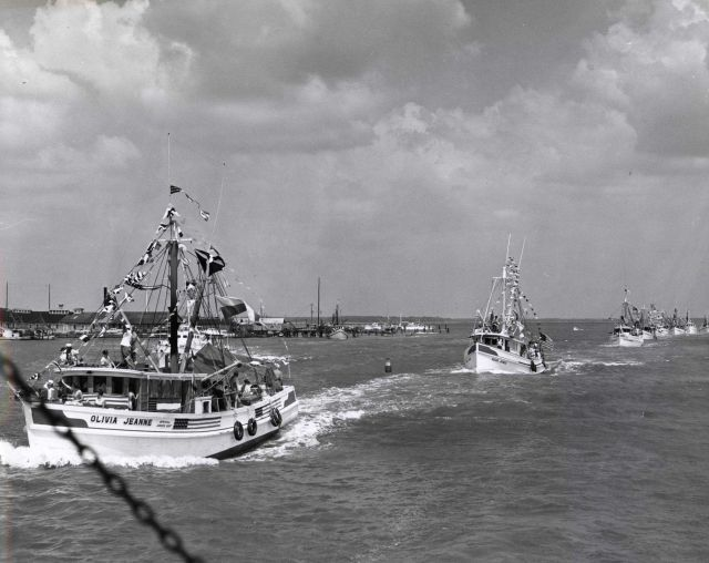 Parade of shrimp boats and other fishing vessels at the Annual Blessing of the Fleet Picture