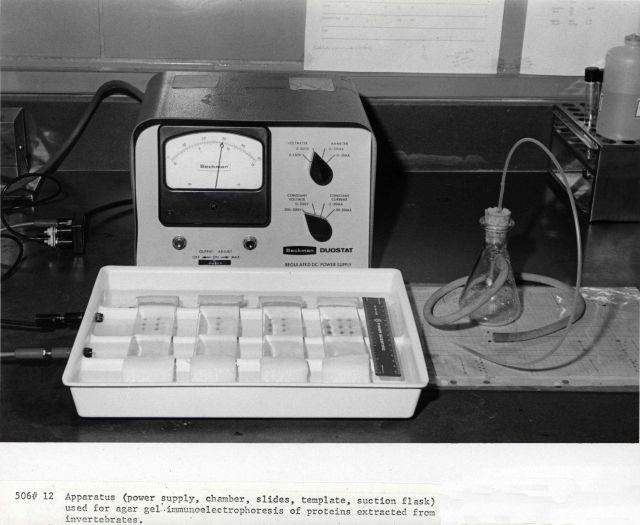 Apparatus (power supply, chamber, slides, template, suction flask) used for agar gel immunoelectrophoresis of proteins extracted from invertebrates. Picture