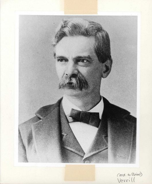 Addison Emery Verrill (1839-1926) zoologist, student of Louis Agassiz, professor at Yale University, and assistant to Spencer Baird Picture