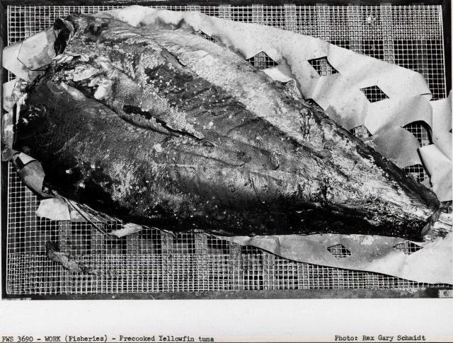 Precooked yellowfin tuna Picture