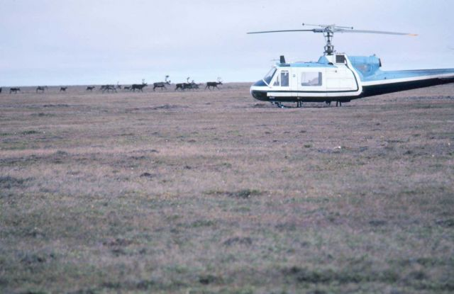 Bell UH-1M ready to load recruited reindeer for Santa's sleigh Picture