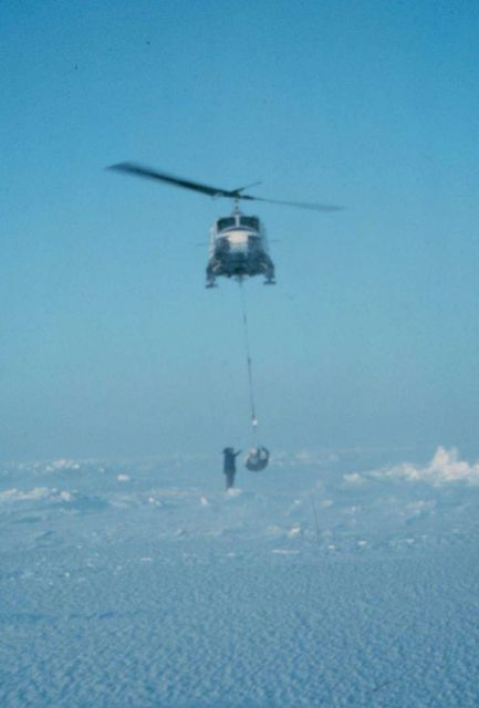 Weighing a polar bear with a NOAA helicopter. Picture