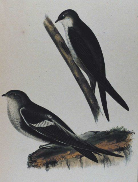 Figure 1 Picture