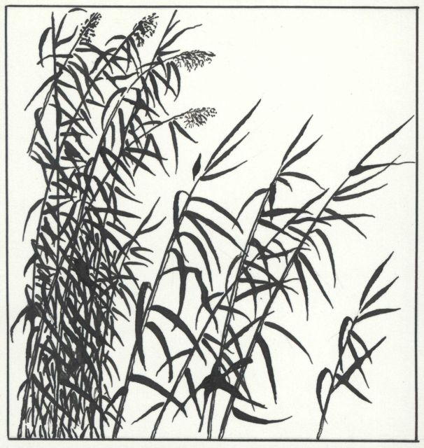 Pen and ink drawing of marsh grass Picture