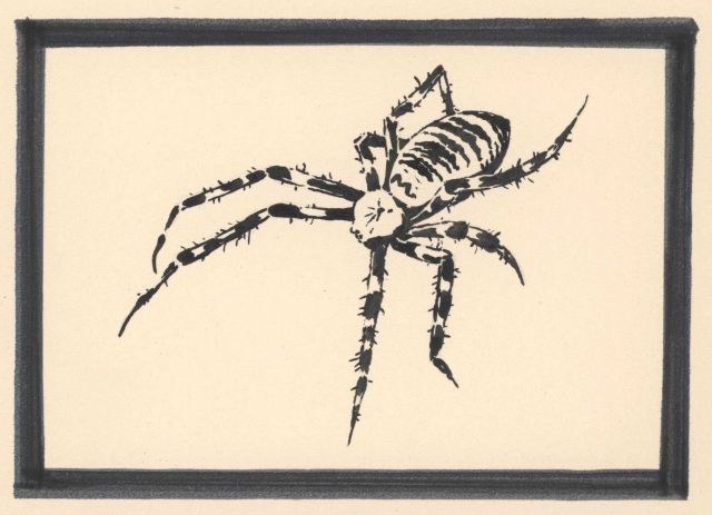 Pen and ink drawing of a spider Picture