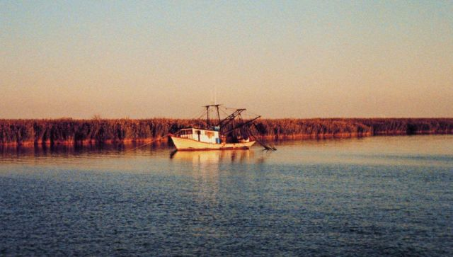 A shrimp boat anchored near the cane brakes Picture