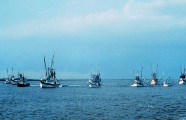 Shrimp boats protesting turtle-excluding device regulations on the Calcasieu River. Picture