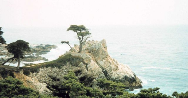 Cypress Point - a world famous landmark on 17 Mile Drive. Picture