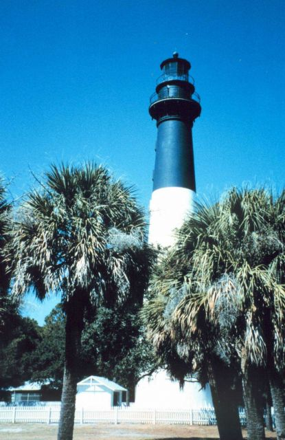 Hunting Island Lighthouse and palmetto trees Picture