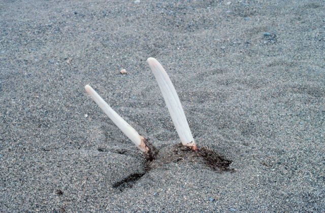 Currents carry many dead things to Punuk Island making it the graveyard of the Bering Sea. Picture