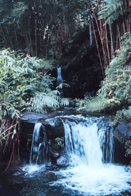 Waterfall surrounded by giant bamboo at Hawaii Tropical Botanical Gardens Picture