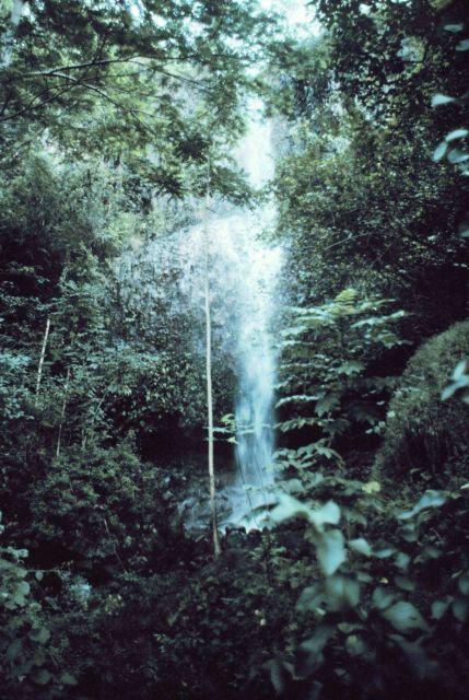 Waterfall on Kauai seen through the rain forest Picture