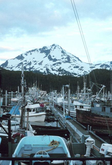 Fishing boats at Cordova Picture