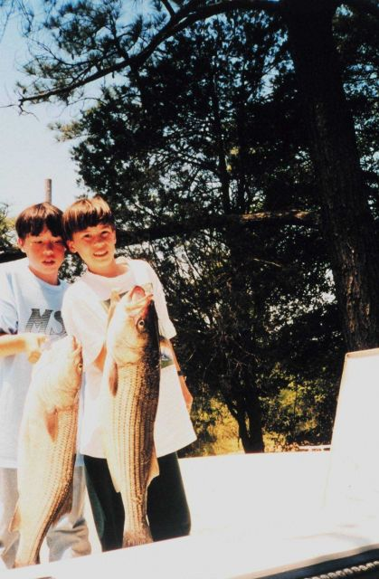 Old rockfish ( striped bass) caught by young fishermen. Picture