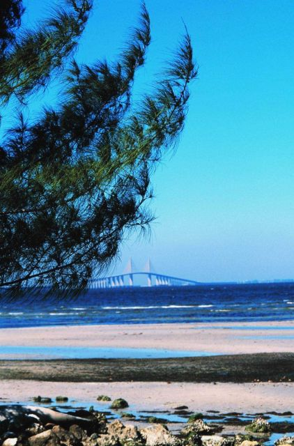 The Sunshine Skyway Bridge looking across the tidal flats towards St Picture