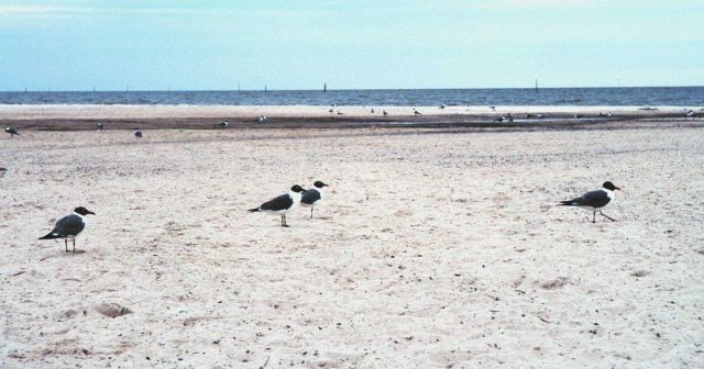 Sea birds along a deserted beach Picture