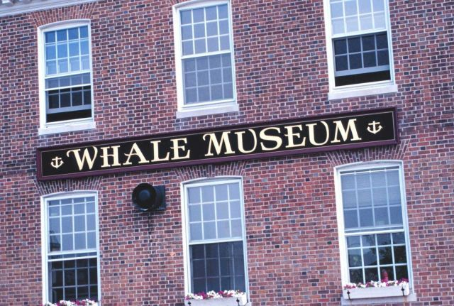 The Whale Museum Picture