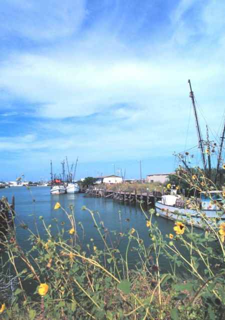 Shrimp boats and sunflowers Picture