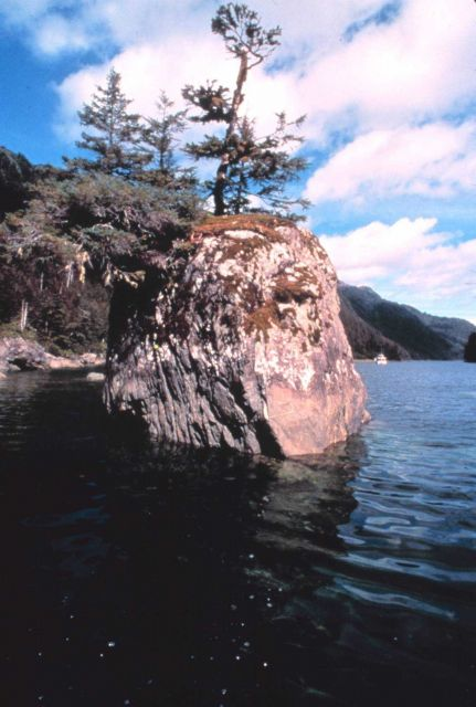 Stunted trees and bushes growing from offshore rock reminiscent of bonsai garden Picture