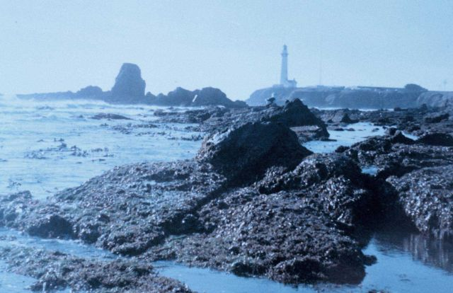 Pigeon Point Lighthouse as seen from the south at low tide on a misty day. Picture