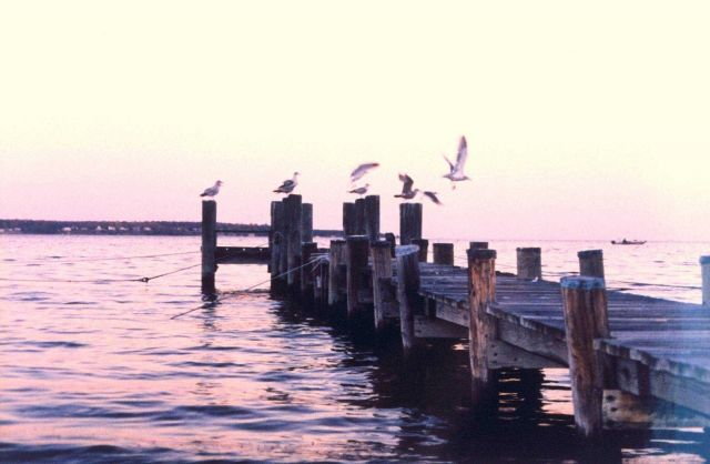 Gulls on a pier at sunset. Picture