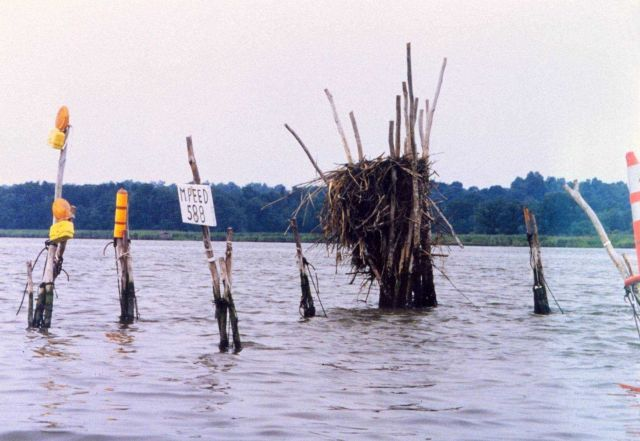 Pound net posts are taken over by osprey, who built their home there. Picture